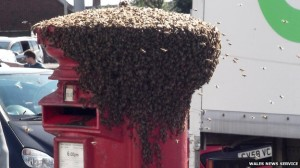 Bees on post box in Swansea