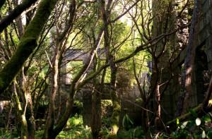 Brynkir manor and folly