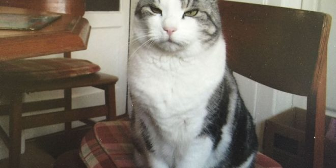 Cat missing for 4 years