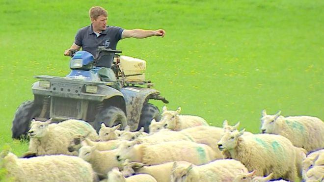 Brexit Sheep farmers